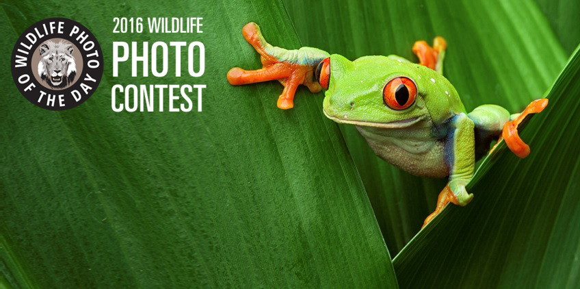 Frog-Contest-Banner-picsay