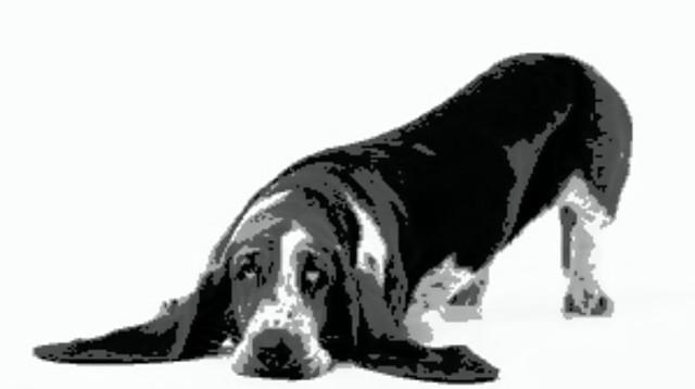 sad_pup_master-picsay